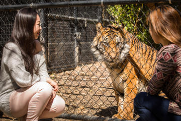 Adelaide Zoo Behind the Scenes Experience: Big Cat Interaction