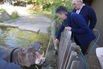 Adelaide Zoo Behind the Scenes Experience: Hippo Interaction