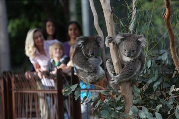Melbourne Zoo General Entry Ticket