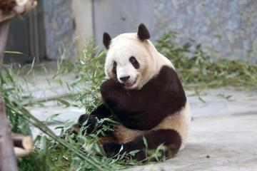 Private Day Tour to Xian Zoo including Seasonal Fruit-picking and Organic Dinner