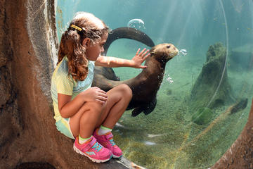 Zoo Miami General Admission with Monorail and Animal Feeding Upgrade