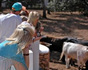 Andalucia Bull and Horse Farm and Ronda Private Tour from Malaga