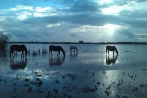 Doñana Natural Park Full-Day Tour from Seville