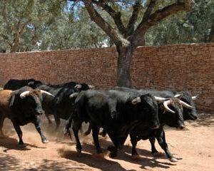 Malaga Shore Excursion: Andalusian Horse Farm and Ronda