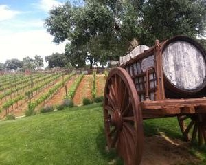 Private Winery Visit and Tour of Ronda from Marbella