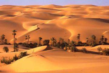 Full day Liwa Desert Safari with over night