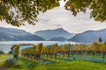 Lucerne Wine Tasting Tour by Lake Lucerne in a Traditional Winery